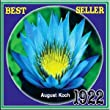 August Koch Tropical Water Lily (Annual)