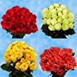 100 Roses | 50 Red 50 Color Cheap Roses