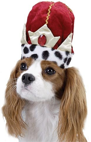 Pet King Dog Halloween Costume Hat For Large