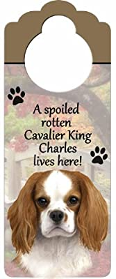 "King Charles Cavalier Wood Sign ""A Spoiled Rotten King Charles Cavalier Lives Here""with Artistic Photograph Measuring 10 by 4 Inches Can Be Hung On Doorknobs Or Anywhere In Home"
