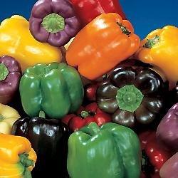 Organic Rainbow Bell