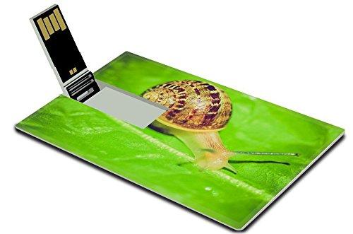 msd-32gb-usb-flash-drive-20-memory-stick-credit-card-size-image-id-27423726-vintage-looking-snail-sl