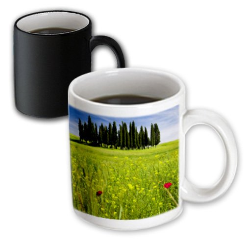Danita Delimont - Tuscany - Cypress Trees, San Quirico, Tuscany, Italy - Eu16 Bjn0217 - Brian Jannsen - 11Oz Magic Transforming Mug (Mug_137659_3)