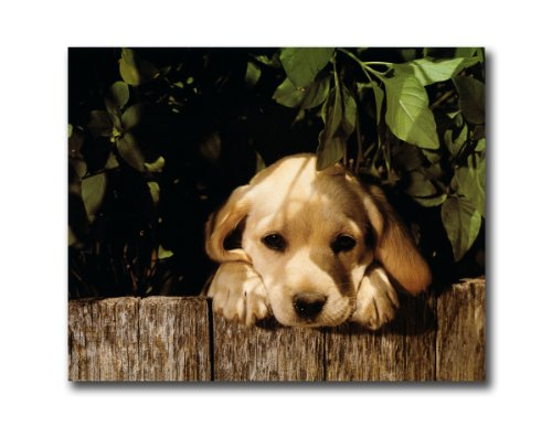 Yellow Lab Puppy Dog Looking Over Fence Wall Picture 8x10 Art Print