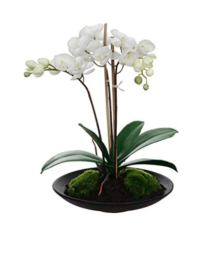 Winward Faux Phalaenopsis in Bowl, Cream