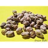 Edamame- Wasabi Coated, 1 lb (Tamaño: 1 lb Wasabi)