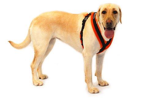 411%2B6MCc5gL walkeez harness size 2 orange mark m marshallioe