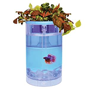 Ocean free betta flora fish tank aquarium for Betta fish tanks amazon