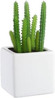 サボテンはおすすめの観葉植物