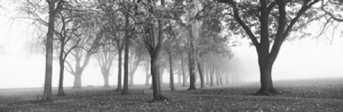 panoramic-images-trees-in-a-park-during-fog-wandsworth-park-putney-london-england-photo-print-9144-x