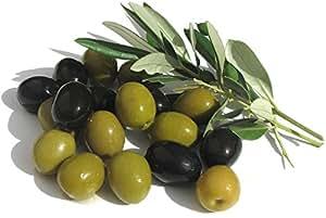 "Hirt's Olive Tree - Tree of Peace - Olea europaea - 3.5"" POT"