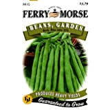 Ferry-Morse 401 Blue Lake Bush Geen Beans 274 Large 84 Gram Seed Packet