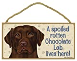 "A spoiled rotten Chocolate Lab lives here wood sign plaque 5"" x 10"""