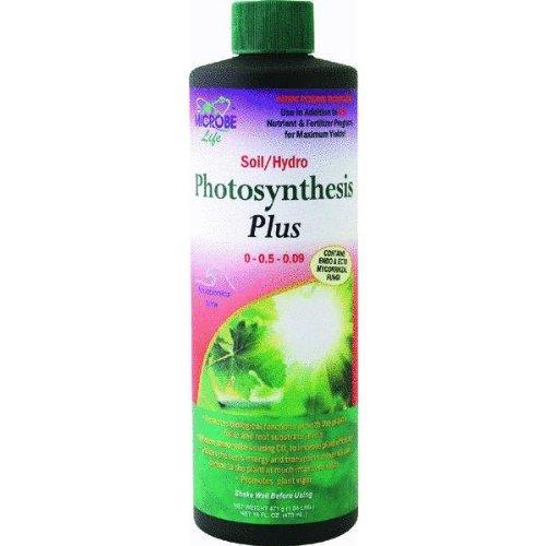 photosynthesis-plus-root-hormone
