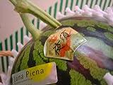 ご贈答にもお勧めです!夜須産ジャンボ「ルナピエナ温室西瓜」