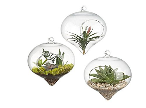 Pack of 3 Hanging Terrarium Glass Vase Flower Air Plant Pot Container Home Office Wedding Decoration Heart Shape (Air Plant In Pot compare prices)