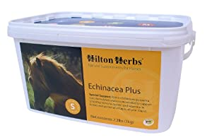 Hilton Herbs Echinacea Plus Herbal Supplement Healthy Immune System for Horses, 1kg Tub