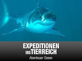 Expeditionen ins Tierreich - Abenteuer Ozean