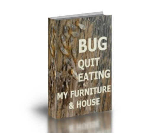 bug-quit-eating-my-furniture-house