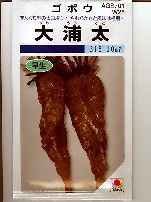 ゴボウ タキイ 大浦太ゴボウ タキイの大浦ゴボウ種です
