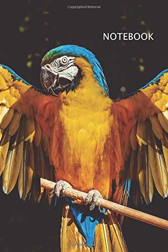 Buy Parrots Now!