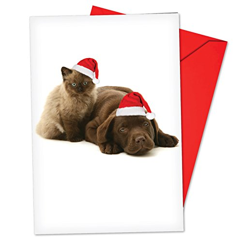 b6596axsg-box-set-of-12-christmas-copy-cats-christmas-greeting-cards-featuring-adorable-puppies-and-