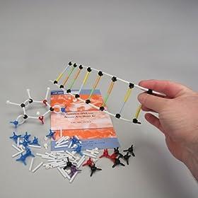 DNA Model Kit A