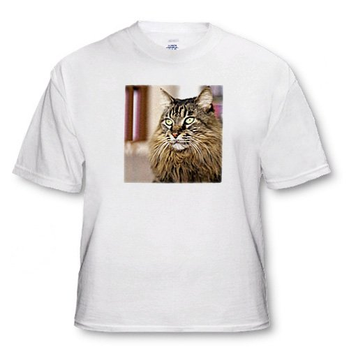 Maine Coon - Adult T-Shirt Large