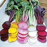 David's Garden Seeds Beet Rainbow Mix D119BEE (Multi Colors) 200 Heirloom Seeds