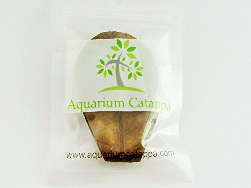 Aquarium Catappa Nano Leaves x 12