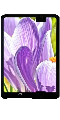 case-for-kindle-fire-hd-7-2012-version-crocus-flower-by-wonderfuldreampicture