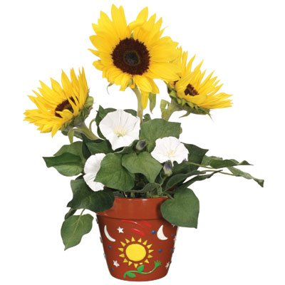 Paint-a-Pot - Sun and Moonflower Garden - Buy Paint-a-Pot - Sun and Moonflower Garden - Purchase Paint-a-Pot - Sun and Moonflower Garden (Toysmith, Toys & Games,Categories,Pretend Play & Dress-up,Sets,Gardening Tools)