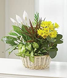 Scent Direct - Eshopclub Same Day Flower Delivery - Fresh Flowers Plants - Wedding Flowers Bouquets - Birthday Flowers - Send Flowers - Flower Arrangements