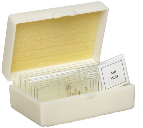 American Educational 10 Piece Glass Prepared Microscope Slide Plant Set