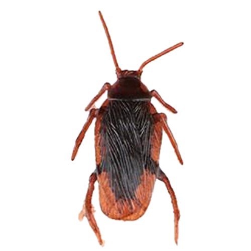 demarkt-50x-cucaracha-falso-cucaracha-falso