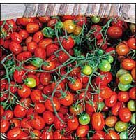 Baker Creek Heirloom Seeds Rareseeds.com 0974 Open-pollinated Tomato Seeds, Cherry Roma, 50 Seed Packet (Discontinued by Manufacturer)