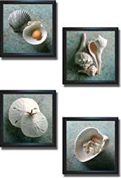 Scallops, Whelks, Sand Dollars, & Shells in Shell by Gayle and Glen Wans 4-pc Premium Satin-Black Framed Canvas Set (Ready-to-Hang)