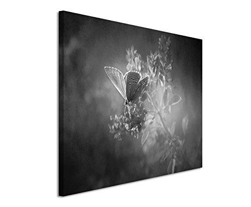 50x70cm Leinwandbild schwarz weiß in Topqualität Vintage Schmetterling
