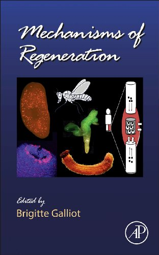 Mechanisms of Regeneration, Volume 108 (Current Topics in Developmental Biology) PDF