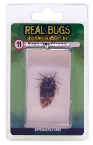 DeAgostini Real Bugs Kaempfer Cicada Bug - 1
