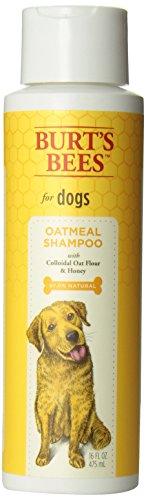 Burts Bee Oatmeal Shampoo 16 Ounce Dfadsfsafafaf