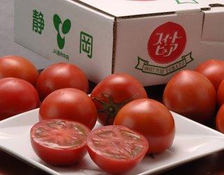 □【訳あり・わけあり】 高糖度フルーツトマト 静岡産「スイートピュア」 2L~3Sサイズ 7~25玉入り 約900g