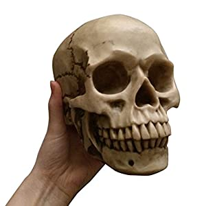 Life Size Realistic Replica Human Skull Halloween Gothic Decoration Ornament Model