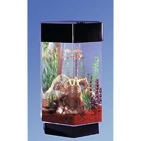20 Gallon Octagon Aquarium Details About Octagon Fish