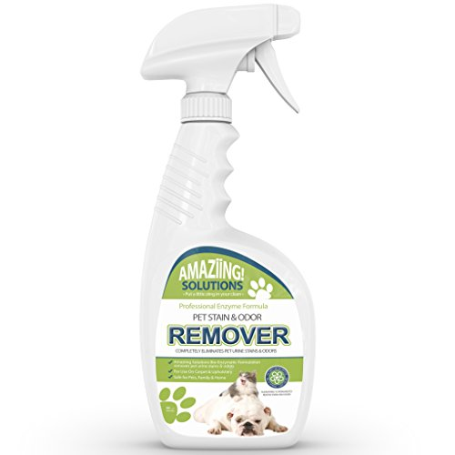 Best Pet Stain Remover And Odor Eliminator Carpet Cleaner