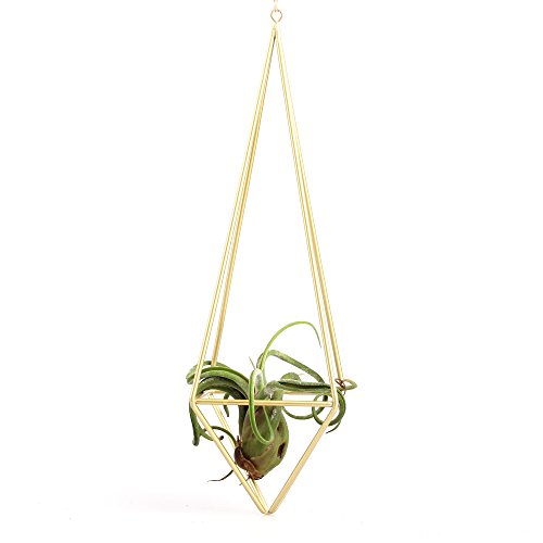 freestanding-hanging-matte-golden-quadrilateral-pyramid-teardrop-shape-geometric-flowers-tillandsia-