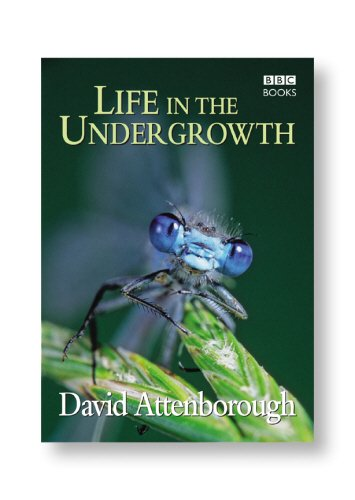 Life in the Undergrowth