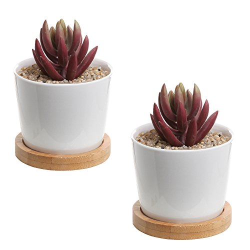 Set of 2 Modern White Ceramic Succulent Planter Pots / Mini Flower Plant Containers with Bamboo Saucers