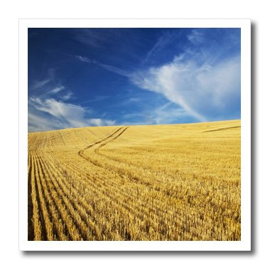 Danita Delimont - Farms - Farm Fields, Harvest Wheat, Palouse, Washington, USA - US48 TEG0425 - Terry Eggers - 10x10 Iron on Heat Transfer for White Material (ht_148727_3)