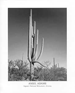 Ansel adams mural project photo cactus for Ansel adams the mural project prints